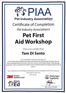 Tamara Di Santo PIAA Best Friend Dog Care dog training, behaviour and relation ship coach Adelaide South Australia