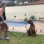Tamara Di Santo Irish Setter Best Friend Dog Care dog training, behaviour and relation ship coach Adelaide South Australia