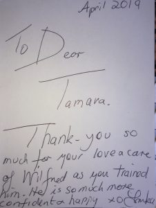 Thank you Tamara Di Santo for the love and care of Wilfred Working Breed German Shepherd whilst training him