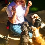 Living with multiple dogs, How to understand my dog dog behavioural training, Tamara Di Santo Best Friend Dog Care, dog training, behaviour and relation ship coach Adelaide South Australia, living with dogs
