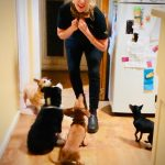 How to feed more than one dog at a time dog behavioural training, Tamara Di Santo Best Friend Dog Care, dog training, behaviour and relation ship coach Adelaide South Australia, living with dogs