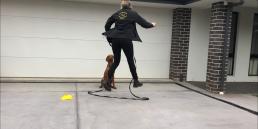 dog behavioural training, Tamara Di Santo Best Friend Dog Care, dog training, behaviour and relation ship coach Adelaide South Australia, living with dogs