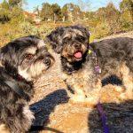 How to find a good dog walker dog behavioural training, Tamara Di Santo Best Friend Dog Care, dog training, behaviour and relation ship coach Adelaide South Australia, living with dogs