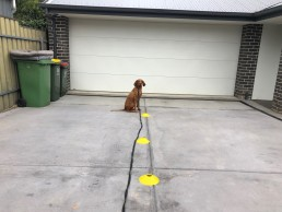 dog behavioural training, Tamara Di Santo Best Friend Dog Care, dog training, behaviour and relation ship coach Adelaide South Australia, living with dogs, sit is sit dog training,
