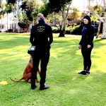 How to train a dog in public dog behavioural training, Tamara Di Santo Best Friend Dog Care dog training, behaviour and relation ship coach Adelaide South Australia