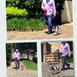 How to stop my dog pulling on leash dog behavioural training, Tamara Di Santo Best Friend Dog Care, dog training, behaviour and relation ship coach Adelaide South Australia