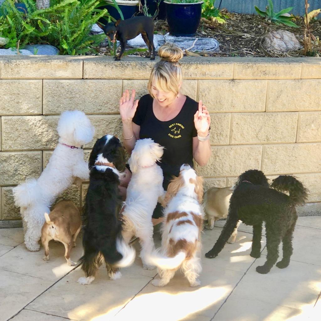 Best Friend Dog Care dog training, behaviour and relation ship coach Adelaide South Australia