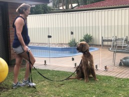 Irish Setter, dog training, sit is sit, Tamara Di Santo Irish Setter Best Friend Dog Care dog training, behaviour and relation ship coach Adelaide South Australia