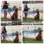 How to stop my dog reacting to other dogs dog behavioural training, Best Friend Dog Care dog training, behaviour and relation ship coach Adelaide South Australia, Tamara Di Santo, Dog Specialist, Dog Grooming, Dog Training, Tea tree gully