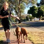 How to walk two dogs with manners dog behavioural training, Tamara Di Santo Best Friend Dog Care, dog training, behaviour and relation ship coach Adelaide South Australia