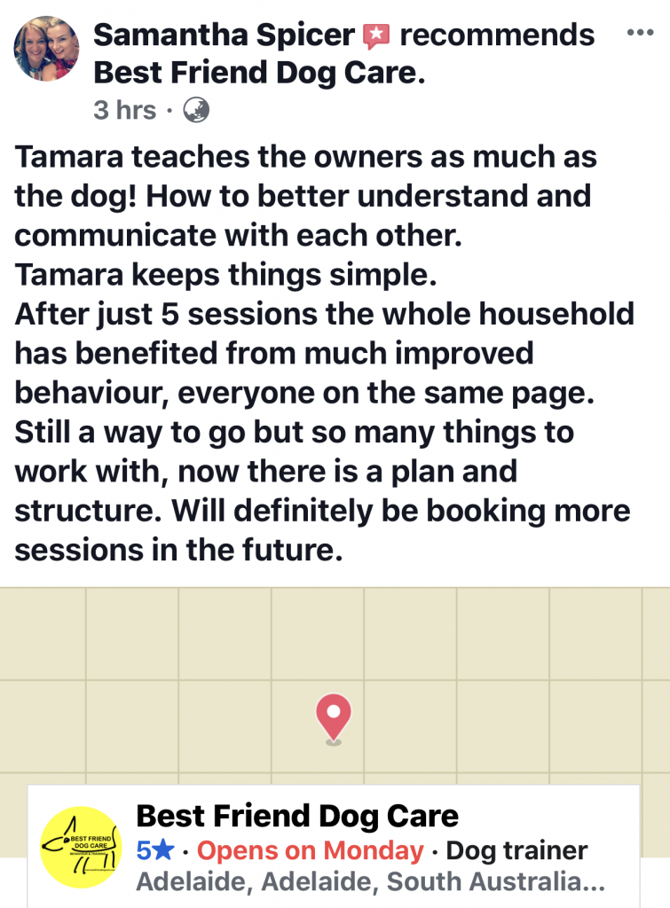 Tamara teaches dog training to both humans and dogs, best friend dog care reviews