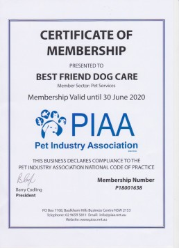 PIAA Pet Industry Association, dog trainer adelaide