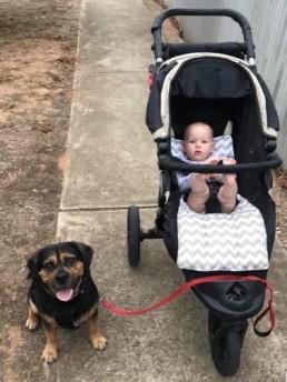 adding a baby to a furchild home, dog training, training with tamara