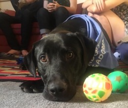 Digital Distance Session- Video Calls, dog training on line, dog trainer, dog training at home, dog pulling on leash, my dog needs help, I adopted a dog how do i train my dog, dog tricks on line