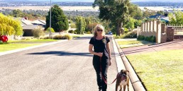 Cavoodles of Adelaide, Groodle training, cavoodle training adelaide, dog training adelaide, Tamara Di Santo dog trainer