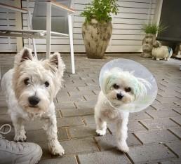 training, best friend dog care, dog training adelaide, tamara di santo, dog training, dog behaviour, adeladie dog training, positive dog training, adelaide reward training,