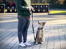 best friend dog care, puppy training adelaide, dog training, positive dog training, reward dog training, tamara di santo, adelaide dog training
