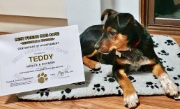 dog trainer, training with tamara ,dog training, puppy training, online dog training, dog walking, dog walker adelaide, trick training for dogs, how to train puppy, best friends, best friend dog training, certified puppy training, heeler, red heeler puppy