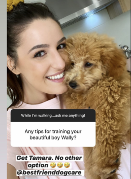 Leah Itsines, Wally mini groodle, dog training, puppy training, online dog training, dog walking, dog walker adelaide, trick training for dogs, how to train puppy, training with tamara