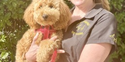 dog trainer, training with tamara ,dog training, puppy training, online dog training, dog walking, dog walker adelaide, trick training for dogs, how to train puppy, best friends, best friend dog training, min groodle, wally and tamara, miniature groodle
