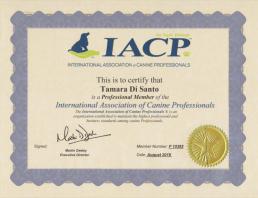 International Association of Canine Professionals - Tamara Di Santo, Best Friend Dog Care, Dog behavioural training Australia