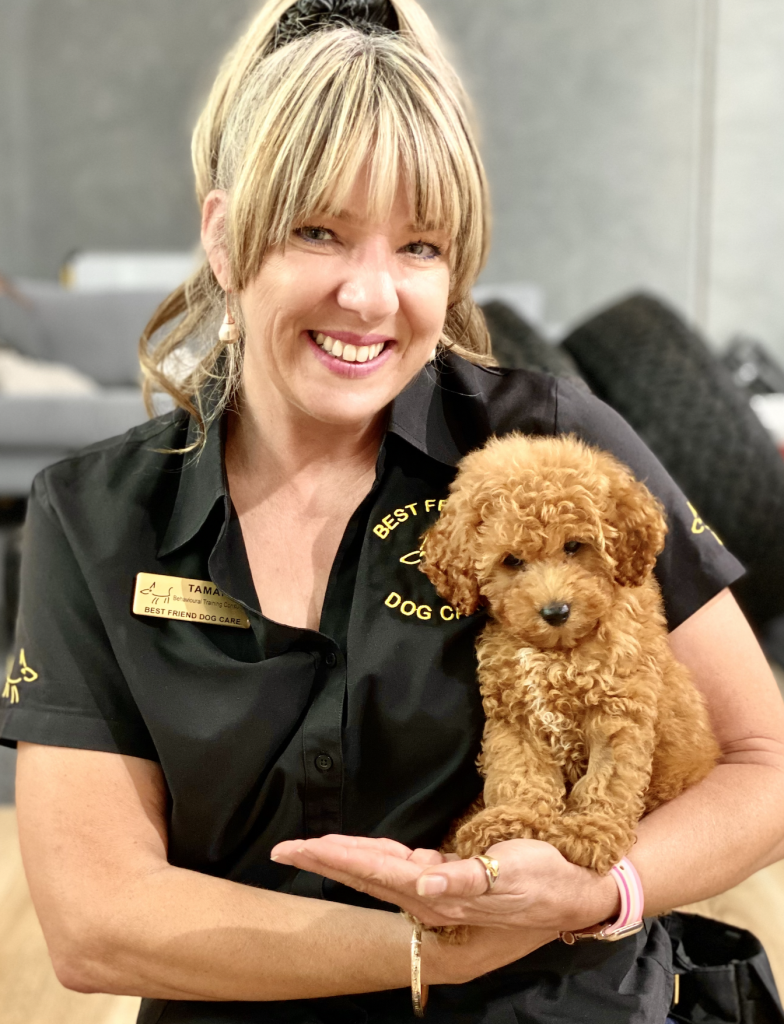 puppy training, dog trainer, training with tamara ,dog training, puppy training, online dog training, dog walking, dog walker adelaide, trick training for dogs, how to train puppy, best friends, best friend dog training,